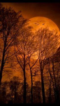 orane moon_tlt5